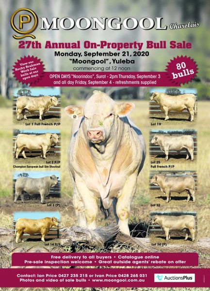 Moongool Charolais Bull Sale