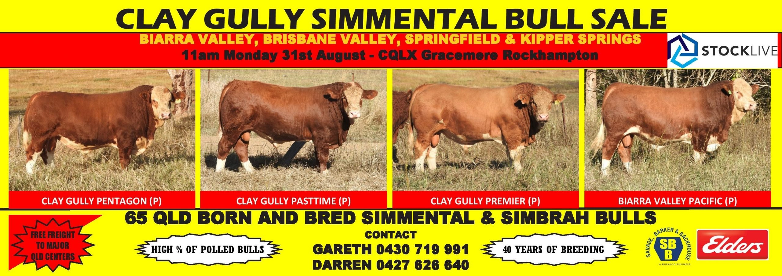 Clay Gully Simmental Bull Sale