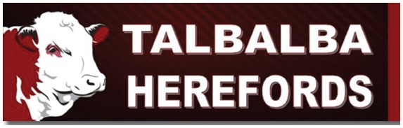 Talbalba Hereford Bull Sale