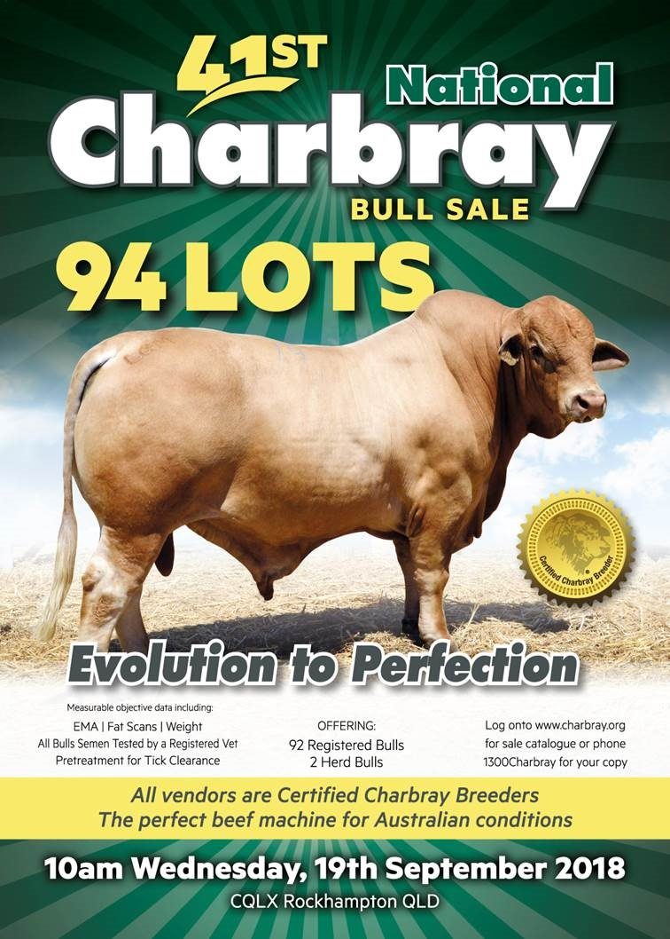 National Charbray Bull & Female Sale