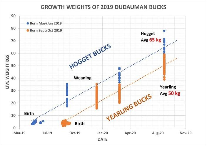 GROWTH OF 2019 BUCKS