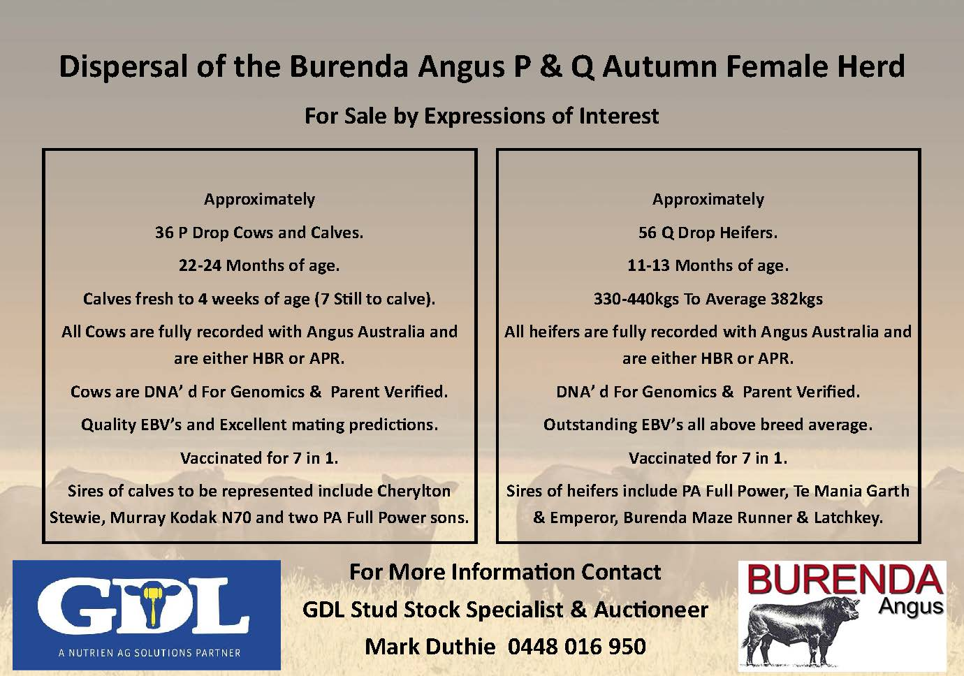 Dispersal – Burenda Angus P & Q Autumn Female Herd
