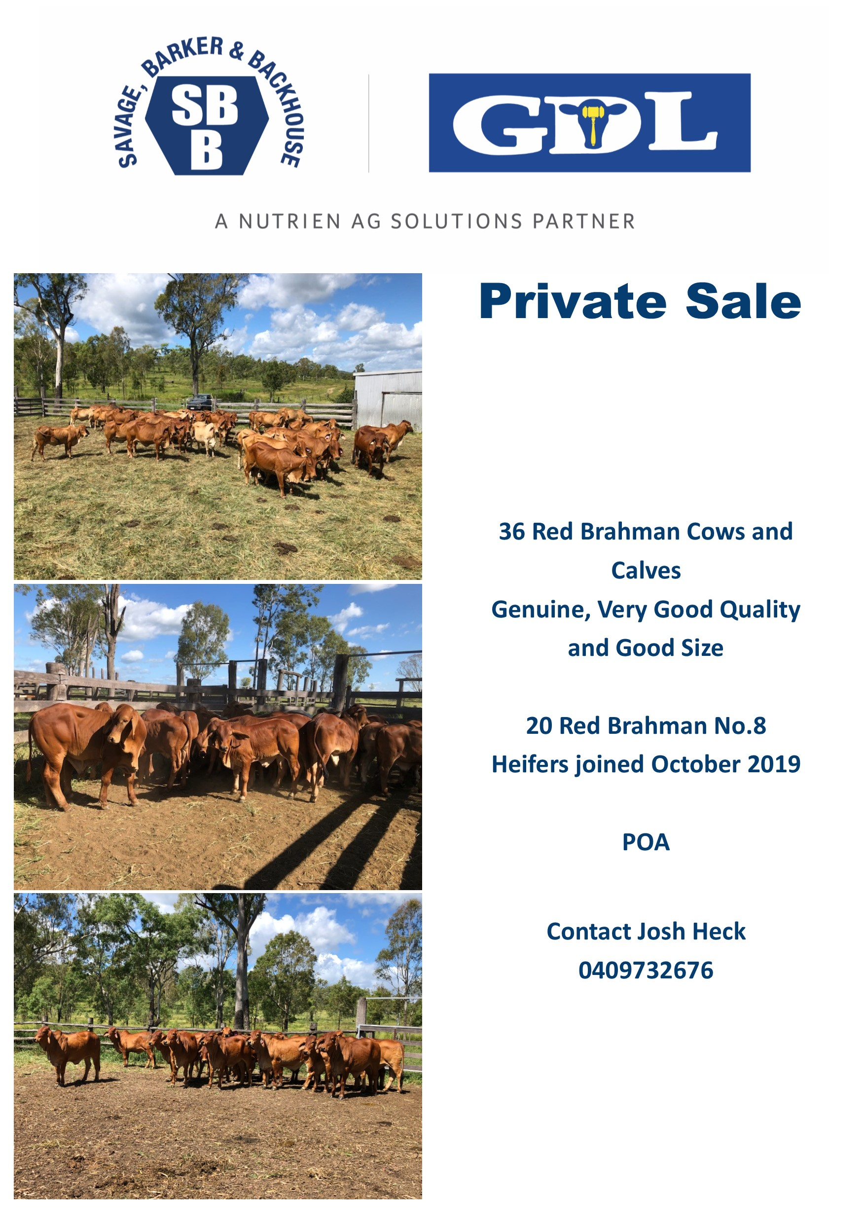 Private Sale -Red Brahman 36  Cows & Calves & 20  No.8 Heifers