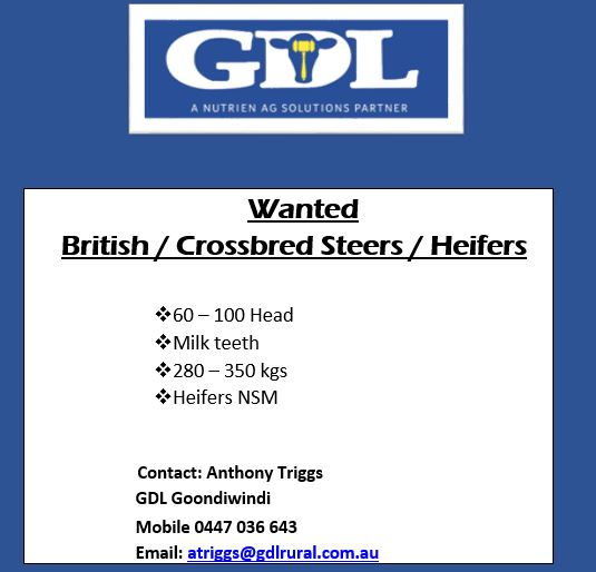 Wanted – British/X Steers & Heifers