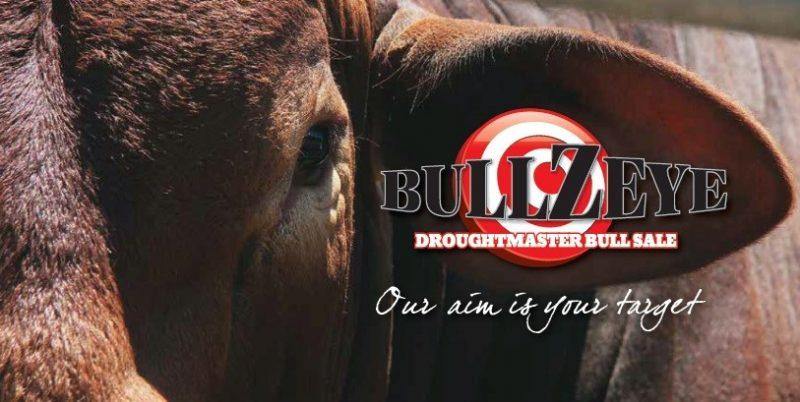 BullZeye Droughtmaster Sale