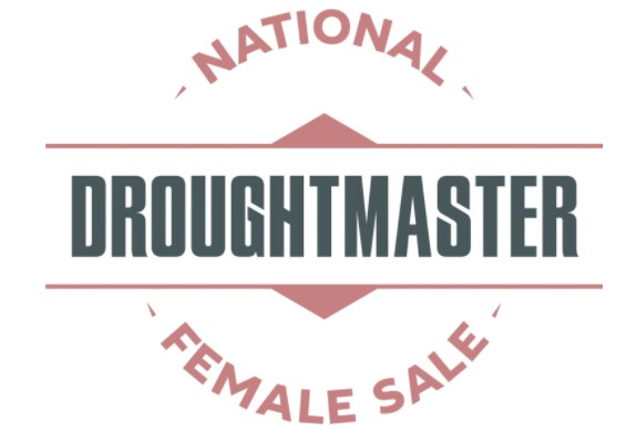 National Droughtmaster Female Sale 2021