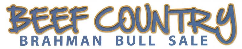 Beef Country Brahman Bull Sale