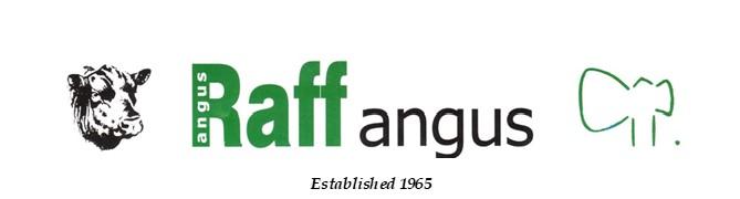 Raff Angus Bull Sale