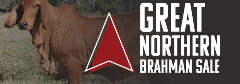 Great Northern Brahman Sale